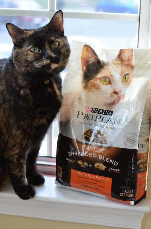 Purina Pro Plan is a great option to feed your cats the best!
