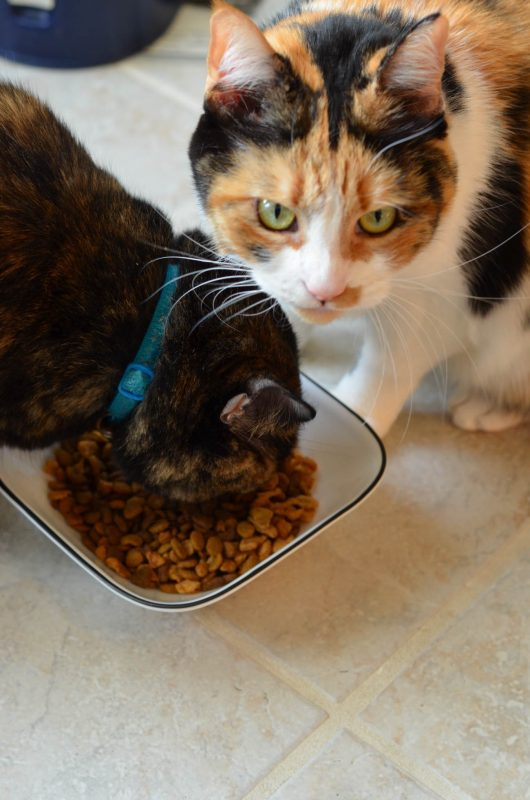 Purina Pro Plan is an amazing, nutritious option to feed my cats the best!